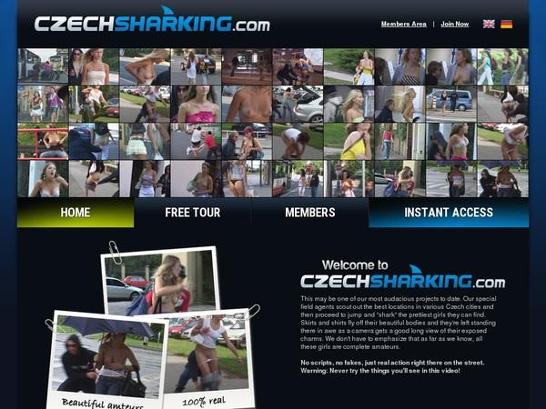 Account Free Czech Sharking
